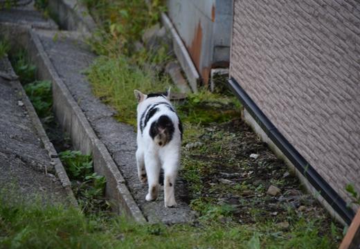 北海道201509-1 (429)_R