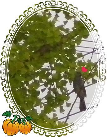 花ブ20151012-2