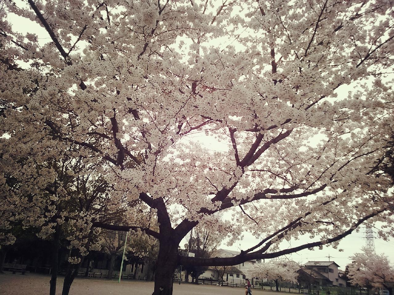 16-04-03-15-10-50-804_deco.jpg