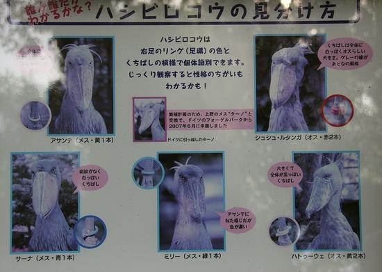上野動物園_11