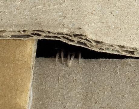コウモリの爪②image1