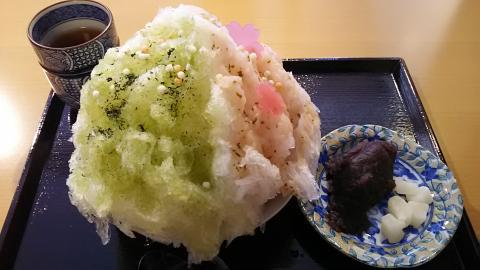 二條若狭屋京の桜 (1)