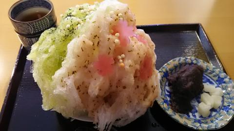 二條若狭屋京の桜 (7)