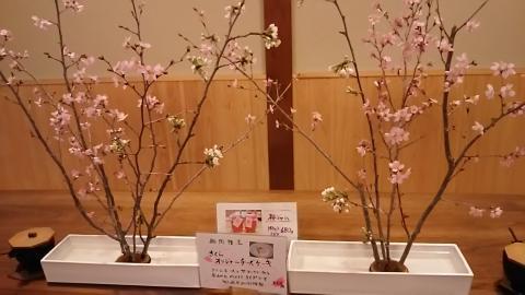 さろん淳平桜チーズケーキ (1)