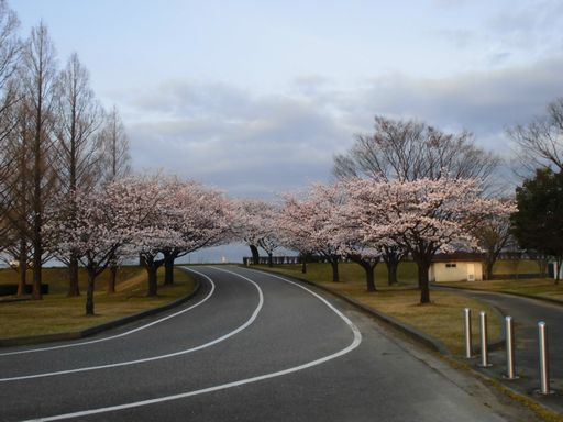 asakura0402-3.jpg