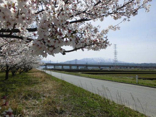 asakura0409-4.jpg