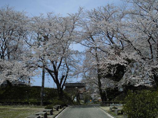 asakura0409-8.jpg