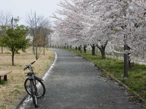asakura0410-3.jpg