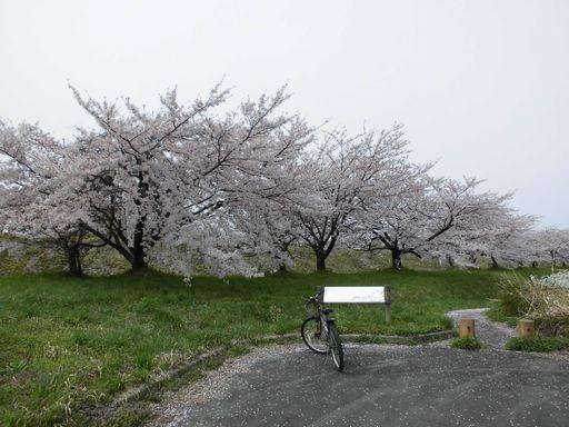 asakura0410-8.jpg
