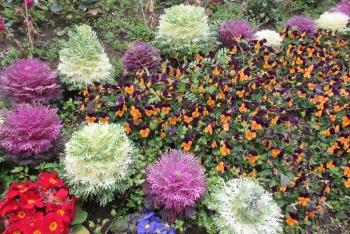 中町公園の花壇