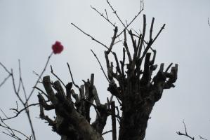 きられた枝達
