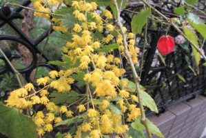 黄色い花と赤い花