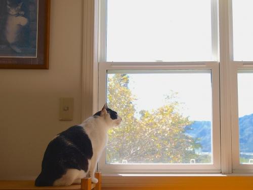 チロ窓mP9114849 - バージョン 2