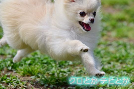 540px20160408_MiTo-02.jpg