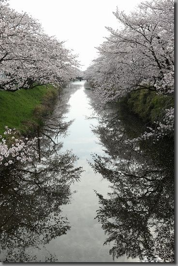 160402犬山祭・桜 087