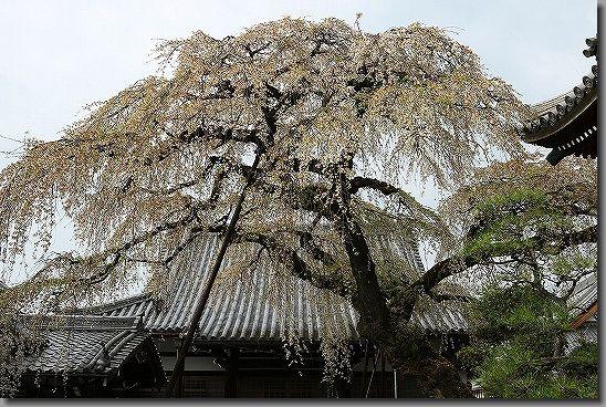 160402犬山祭・桜 128