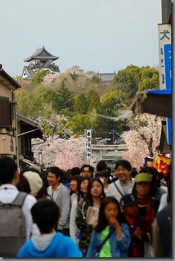 160402犬山祭・桜 150