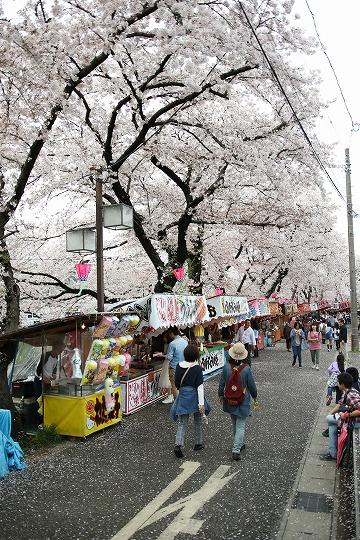160403岩倉・名古屋城桜 028