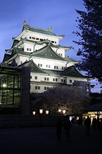 160403岩倉・名古屋城桜 048