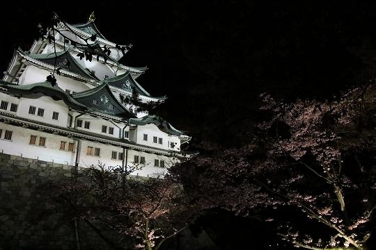 160403岩倉・名古屋城桜 074