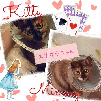 キティ&ミミィ_1782