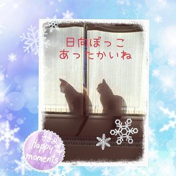 キティ&ミミィ_3908