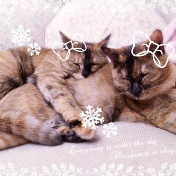 キティ&ミミィ_3081