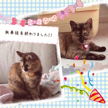 キティ&ミミィ_3855