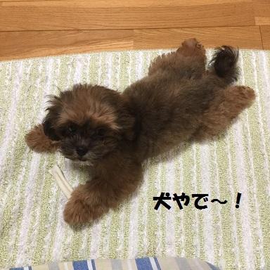 20151209犬