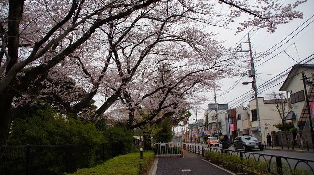 160402桜祭り①