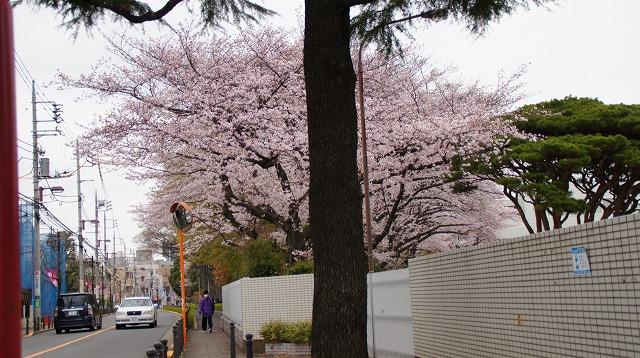 160402桜祭り②