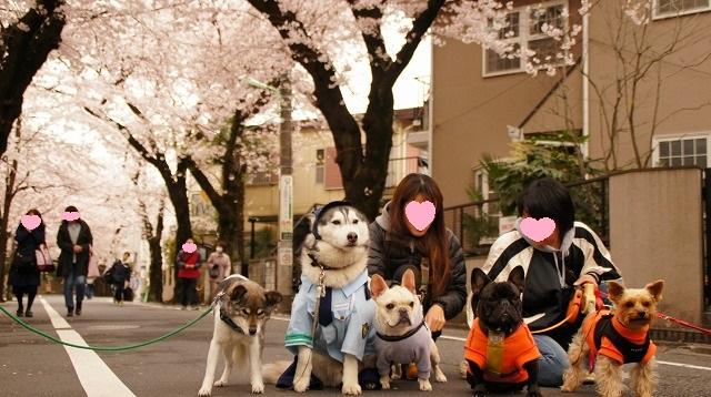 160402桜祭り⑰
