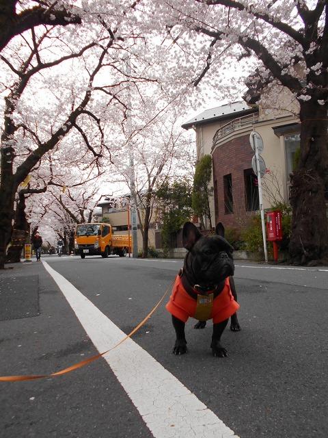 160402桜祭り⑳4