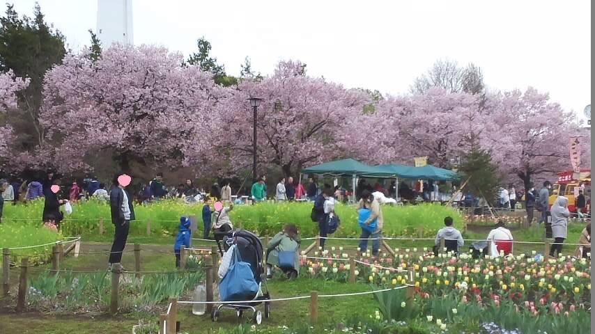 160403芦花公園お花見①