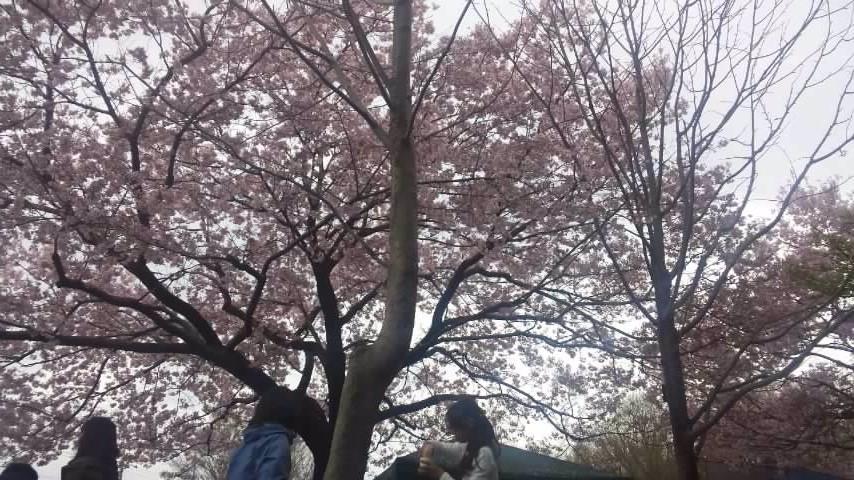 160403芦花公園お花見⑤