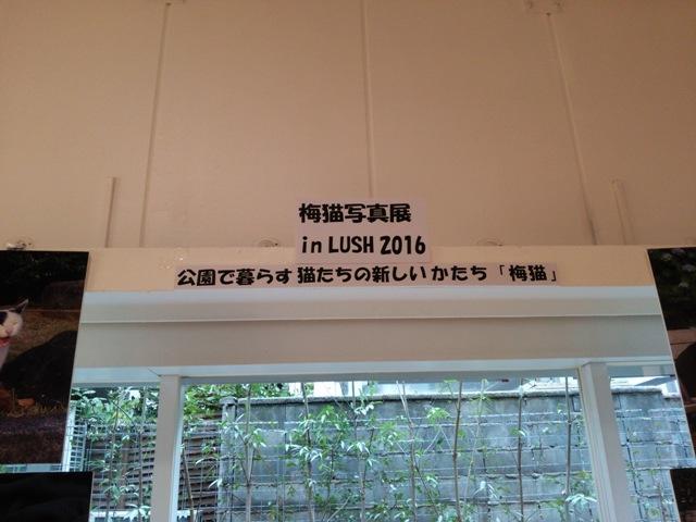 20160215 (1018)