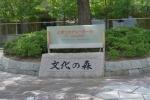 文化の森公園11