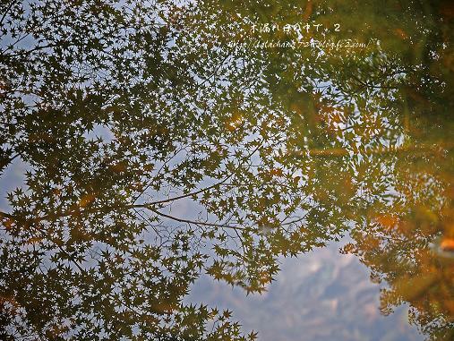 池にうつったモミジ