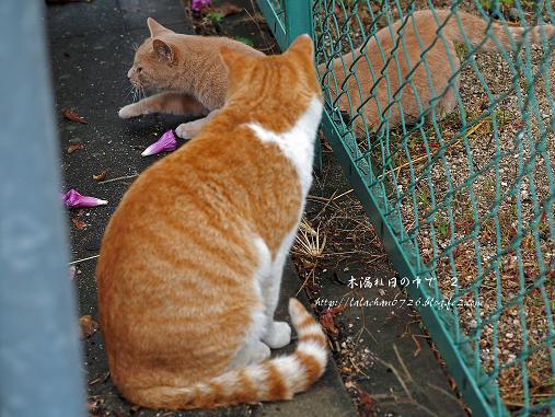猫2匹 5