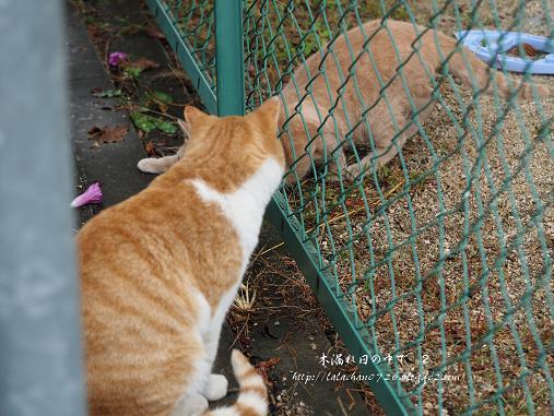 猫2匹 3