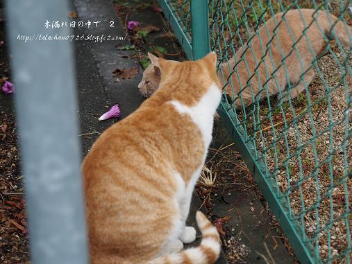 猫2匹 4