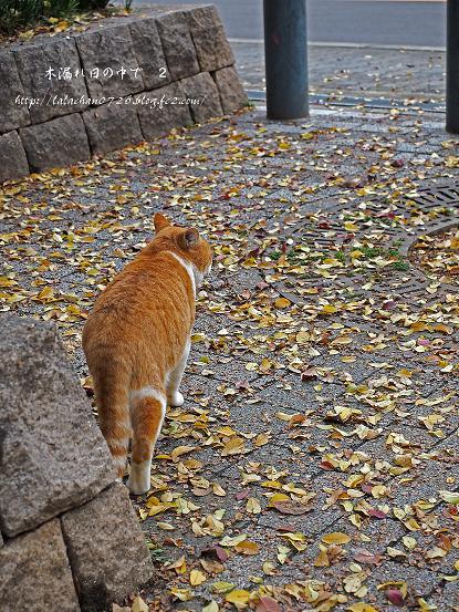 落ち葉でいっぱい