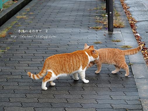 猫さん2匹
