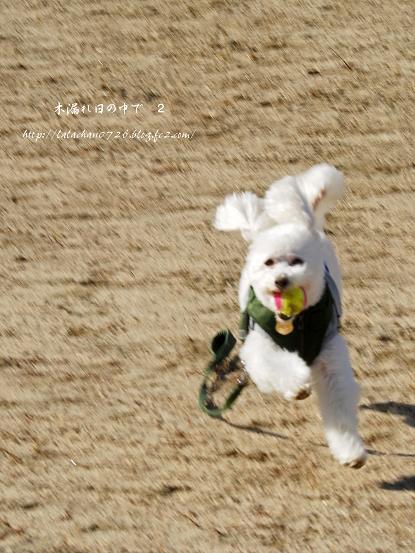 飛行犬か??