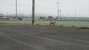 蘭号ボール遊び (4)_R