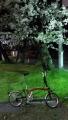 桜の下 自転車