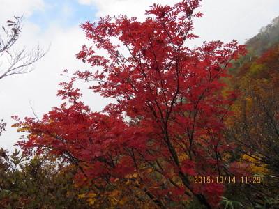 8 紅葉 (2)_1