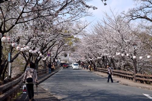 280328 桜1