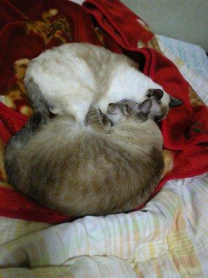 寝んねこタヌさん&エピさん