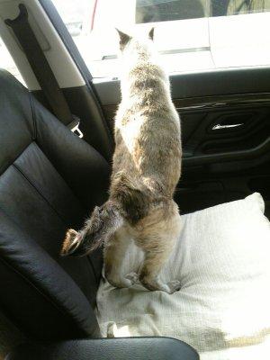 車からお外を見るエピさん